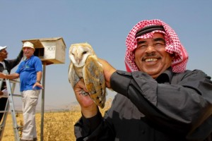 A Jordanian farmer holds a barn owl as a Jewish Israeli farmer, in the blue top, examines a nest box Hagai Aharon